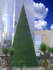 Giant artificial Christmas trees!